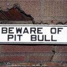 Perros similares a los Pit Bull