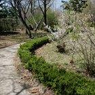 Driveway garden ideas