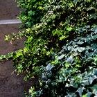 Plantas de exterior que no necesitan luz directa