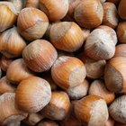 How to Roast Hazelnuts in the Shell