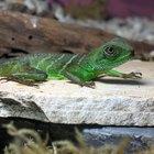 Zoonotic Diseases in Reptiles