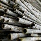 Cuidados para una vaporera de bambú