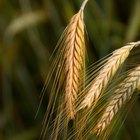 La definición de fibra cruda en la comida