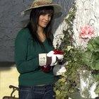 Cómo eliminar a las cochinillas o pulgones lanudos de tus plantas