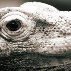 Cómo digieren los reptiles