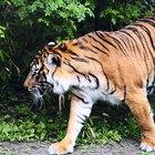 Lista de animales en peligro de extinción en la India