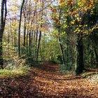 Características de um ecossistema florestal