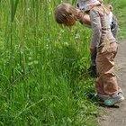 Cómo organizar una búsqueda del tesoro para los niños