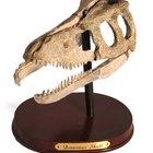 Ferramentas usadas por um paleontólogo