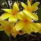 ¿Cuál es el pistilo de una flor?