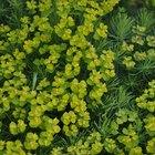 Efectos de los fertilizantes en el crecimiento de las plantas
