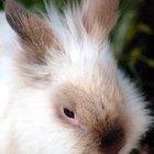 Cómo jugar con tu conejo