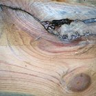 Como remover tinta seca de pisos de madeira e rodapés
