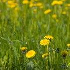 ¿Qué es el herbicida 2,4-D?