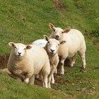 Cómo devolver el color blanco nuevamente al tejido de lana amarillento
