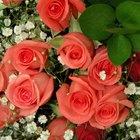 Cómo hacer un ramo redondo de rosas
