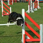 How to Get Your Dog to Jump Hurdles