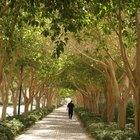 Quais são os benefícios de andar com pesos?