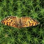 O papel das borboletas nos ecossistemas