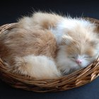 How to Treat Fur Balls in Cats