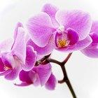 ¿Cuál es el mejor suelo para el crecimiento de lar orquídeas?