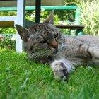 Convulsões e morte neural de felinos