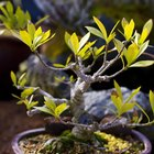 Types of Indoor Plants With Twisted Trunks