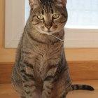 ¿Con qué frecuencia deberías desparasitar a tu gato?