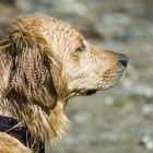 ¿Se puede usar acondicionador para cabello humano en perros?