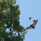 Cómo quitar a los murciélagos de tu techo