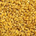Tipos de granos y cereales