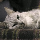 Cómo quitar el olor a orina del sofa naturalmente