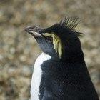 ¿Cómo mantienen el calor los pingüinos?