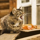 What Makes a Cat Hiss at People?