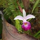 El hábitat natural de las orquídeas