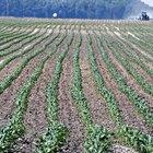 ¿Cuál es el principio de sembrar y cosechar?