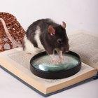 Cómo construir trampas para atrapas ratas vivas en casa