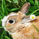 Como tratar distúrbios urinários em coelhos
