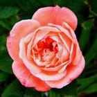Definiciones de las partes de una flor