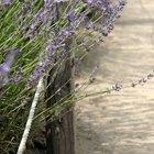 Common Roadside Flowers