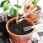 Cómo hacer tierra para macetas