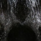 Ferida em olhos de felinos