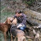 Las 10 mejores razas de perros por sentido del olfato