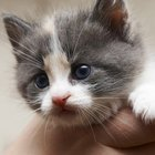 What Are Ways to Calm a Kitten?