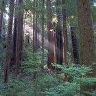 Campamentos silvestres en California para adolescentes desafiantes