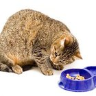 Wet Food Vs. Dry Food for Cats
