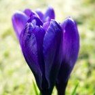 Which flowers bloom in March?
