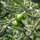 Como fazer tinta verde oliva acinzentada