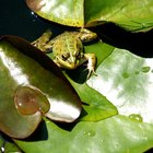 Diferencias entre reptiles y anfibios
