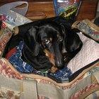 How Much is an Airline Ticket for Dogs?